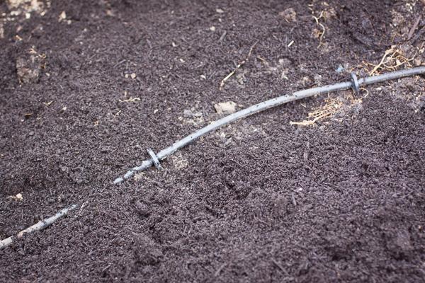 planting_lettuce-006