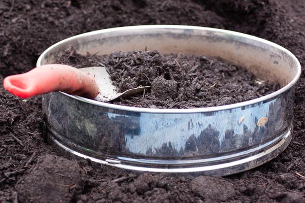 planting_lettuce-009